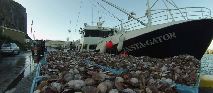 McGuinness Fisheries | Marine Consultants